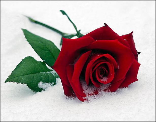 ... sa shume te du edhe pa te dhuruar lule, ja sonte po ta dhuroj kete